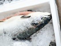 El método de almacenamiento de pescados frescos en el pecho de hielo Foto de archivo libre de regalías