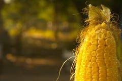El maíz Foto de archivo