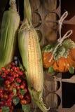 El maíz acorta el colgante al revés Fotos de archivo libres de regalías