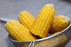 El maíz boilen en la cacerola Foto de archivo