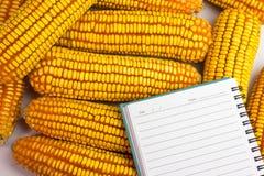 El maíz colocó junto al cuaderno Foto de archivo libre de regalías