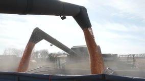 El maíz cosechado descargó caer de cosechadora en un camión almacen de metraje de vídeo