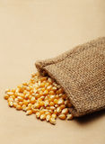 El maíz del grano en pequeño saco Fotografía de archivo libre de regalías