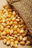 El maíz del grano en pequeño saco Fotos de archivo libres de regalías