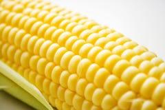 El maíz en blanco Fotografía de archivo libre de regalías