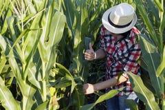 El maíz joven está haciendo gran progreso foto de archivo