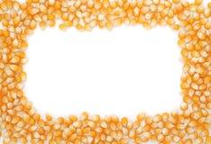El maíz siembra el marco Fotografía de archivo libre de regalías