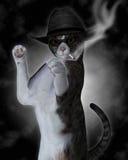 El mán gato Fotografía de archivo libre de regalías