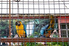 El macaw de dos loros se sienta en un polo y uno mira delantero y otro detrás Fotos de archivo