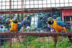 El macaw de varios loros se sienta en un polo y mira el primero plano Imagen de archivo libre de regalías