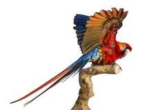 El Macaw del escarlata (4 años) se encaramó en una rama y un aleteo su fotografía de archivo libre de regalías