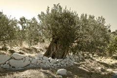вал места молярной ночи el madrid прованский Стоковое Изображение