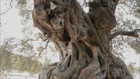 el Madrid molarnej noc oliwny sceny drzewo Fotografia Royalty Free