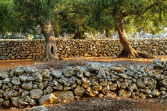 el Madrid molarnej noc oliwny sceny drzewo Obrazy Stock