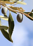 el Madrid molarnej noc oliwny sceny drzewo Zdjęcia Stock