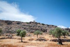 el Madrid molarnej noc oliwny sceny drzewo Drzewo oliwne dziki gaj na wyspie Rhodes, Grecja europejczycy obraz stock