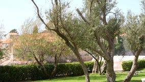 el Madrid molarnej noc oliwny sceny drzewo Oliwni gaje i ogródy zbiory wideo