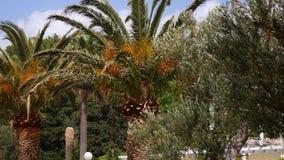 el Madrid molarnej noc oliwny sceny drzewo Oliwni gaje i ogródy zdjęcie wideo