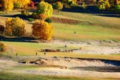 El manada en la pradera del otoño Fotos de archivo libres de regalías