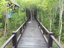 El mangle reforesta Imágenes de archivo libres de regalías