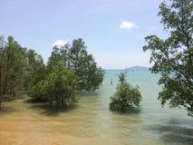 El mangle reforesta Foto de archivo libre de regalías