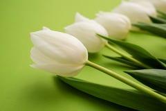 El manojo de flores blancas frescas del tulipán se cierra encima de la composición en fondo verde Foto de archivo