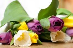 el manojo de flores púrpuras, amarillas y blancas frescas del tulipán se cierra para arriba Foco y bokeh suaves Foto de archivo libre de regalías