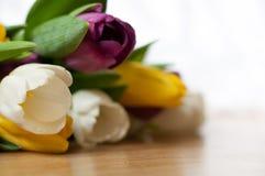 el manojo de flores púrpuras, amarillas y blancas frescas del tulipán se cierra para arriba Foco y bokeh suaves Imagen de archivo libre de regalías