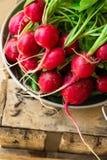 El manojo de rábano rojo orgánico fresco con agua cae en el cuenco de aluminio en la caja de madera resistida del jardín, consumi Fotos de archivo