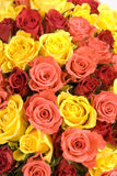 El manojo de textura de las rosas Fotografía de archivo