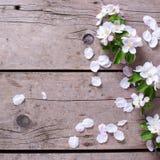 El manzano blando de la primavera florece en backgrou de madera envejecido del vintage imagenes de archivo