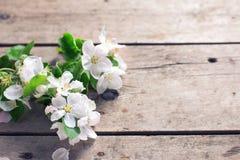 El manzano blando florece en fondo de madera envejecido del vintage fotografía de archivo