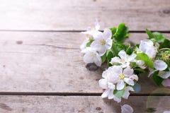 El manzano blando florece en fondo de madera envejecido del vintage fotos de archivo