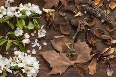 El manzano de la primavera todavía florece y las hojas de otoño en fondo de madera como vida Imagenes de archivo