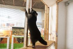 El mapache lindo se coloca en sus piernas traseras en la jaula en el parque zoológico foto de archivo libre de regalías