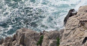 El mar agita detrás de las rocas blancas almacen de video