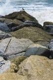 El mar agitado no asusta los animales imagenes de archivo