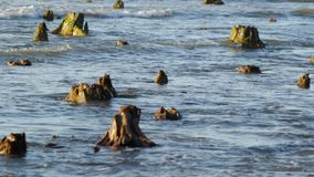El mar Báltico y los tocones almacen de video