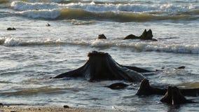 El mar Báltico y los tocones metrajes