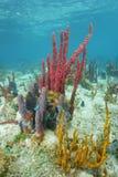 El mar colorido limpia el submarino con esponja en el fondo del mar Imágenes de archivo libres de regalías