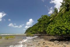 El mar coralino resuelve la selva tropical de Daintree Imagenes de archivo