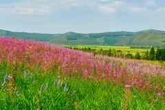 El mar de flores en los prados Imagen de archivo