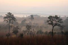 El mar de la niebla en el prado del bosque Imágenes de archivo libres de regalías