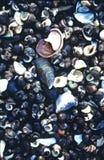El mar de marea del borde descasca la isla Kennebunk Maine de la fresa de la colección Fotografía de archivo
