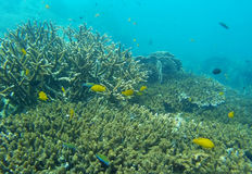 El mar del ‹las anémonas de Tailandia, mar del †del ‹del †es mar Fotografía de archivo