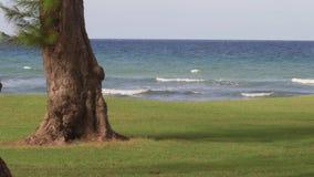 El mar del Caribe agita vacaciones tropicales almacen de metraje de vídeo