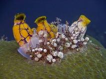 El mar del Tinta-punto arroja a chorros imagen de archivo libre de regalías