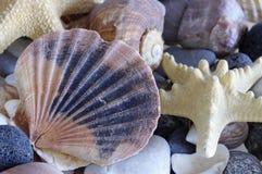 El mar descasca conchas marinas Fotografía de archivo libre de regalías