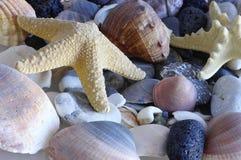 El mar descasca conchas marinas Imagen de archivo