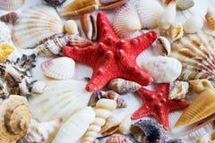 El mar descasca la colección en el fondo de madera blanco Imágenes de archivo libres de regalías